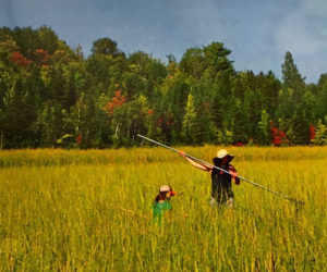 Ricing for Life: My dear friend Emily and her daughter Leah pulling in the bounty of wild rice that we are so blessed with in the north.
